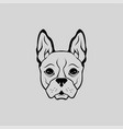 animal bulldog cute puppy head front view vector image
