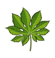 Full leaf of fatsia japonica palm tree sketch vector image vector image