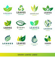 green leaf eco design friendly nature elegance vector image vector image