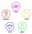 human senses vector image vector image