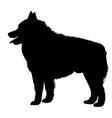dog schipperke breed silhouette vector image vector image