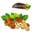 hazelnut kernel with green leaves set vector image vector image