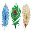 Set of bird feathers vector image vector image