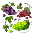 set of different varieties of grapes and grape lea vector image