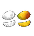 whole and slice mango color vintage vector image vector image
