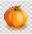 realistic pumpkin isolated vector image