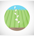 ear of rice flat icon vector image