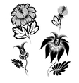 floral graphic design elements vector image vector image