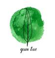 leaf gum tree vector image vector image