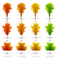 set of colorful autumn leaves white background vector image vector image