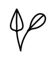 leaves foliage narute decoration organic icon vector image vector image