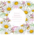 chamomile flowers card vintage style round decor vector image