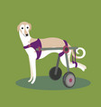 set of handicapped disabled dogs vector image vector image