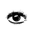 sketch of a realistic eye vector image vector image