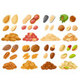 cartoon nuts almond peanut cashew hazelnut vector image
