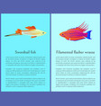 filamented flasher wrasse and swordtail fish vector image vector image