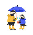 cute badger family standing together isolated on vector image