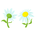 daisy isolated vector image vector image
