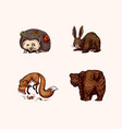 forest animals bear grizzly and red fox hare vector image vector image