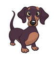 cartoon cute dachshund dog vector image