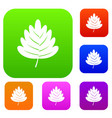 hawthorn leaf set color collection vector image vector image