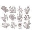 sketch seaweed isolated ocean seaweeds aquarium vector image