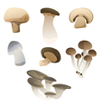 mix mushroom vector image vector image
