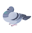 Pigeon vector image vector image