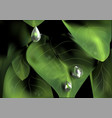 plant droplet vector image