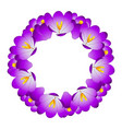 purple crocus flower wreath vector image