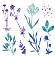 wild floral elements herbs flowers and leaves vector image