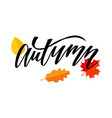 autumn lettering calligraphy brush text holiday vector image vector image