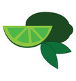 gree lime slice with green leaves on white vector image