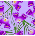 purple crocus flower on light violet background vector image vector image