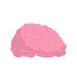 brain isolated human brains on white background vector image vector image