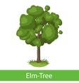 Elm-Tree cartoon icon vector image vector image