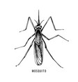 hand drawn mosquito vector image