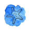 star fish vector image vector image