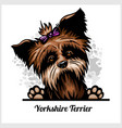 yorkshire terrier - peeking dogs - breed face head vector image vector image