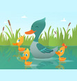 background cartoon duck of funny vector image