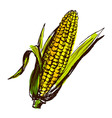 Colored hand sketch corn vector image