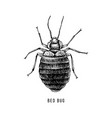 hand drawn bed bug vector image