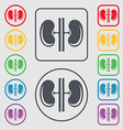 Kidneys icon sign symbol on the Round and square vector image