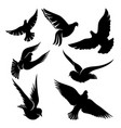 set black doves in flight vector image vector image