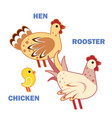 domestic birds rooster hen and chicken on white vector image vector image