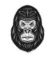gorilla head in vintage style vector image