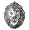 lion head hand draw vintage engraving black vector image vector image