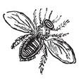 bee vintage vector image vector image