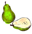 Colored hand sketch pears vector image vector image
