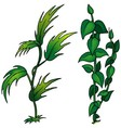 Plant Set vector image vector image